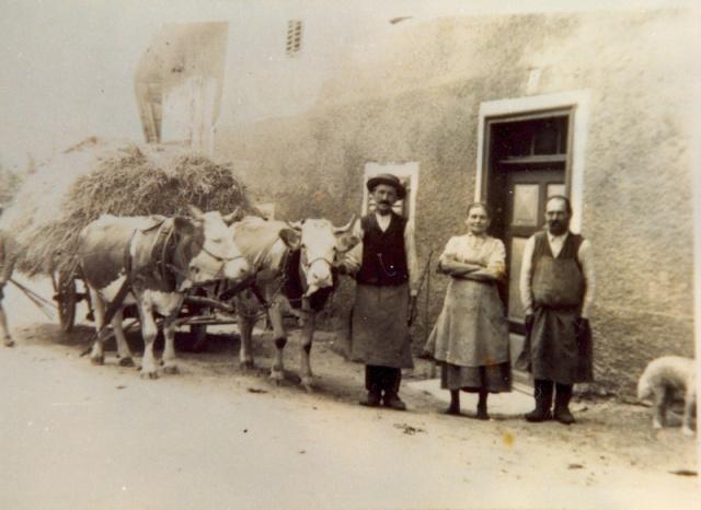 Als die Ochsen noch als Zugtiere dienten (Unterdorf)